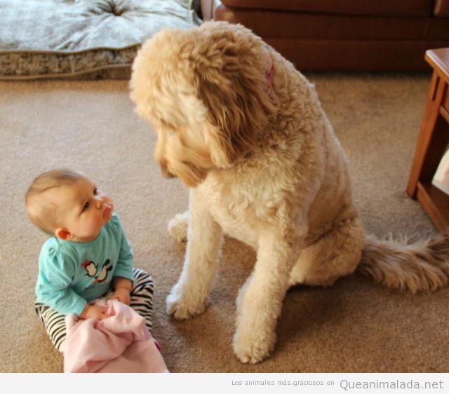 Bebé gracioso y perro se miran sin entenderse