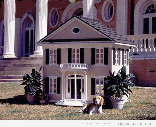 Casa perro reproducción miniatura casa amos