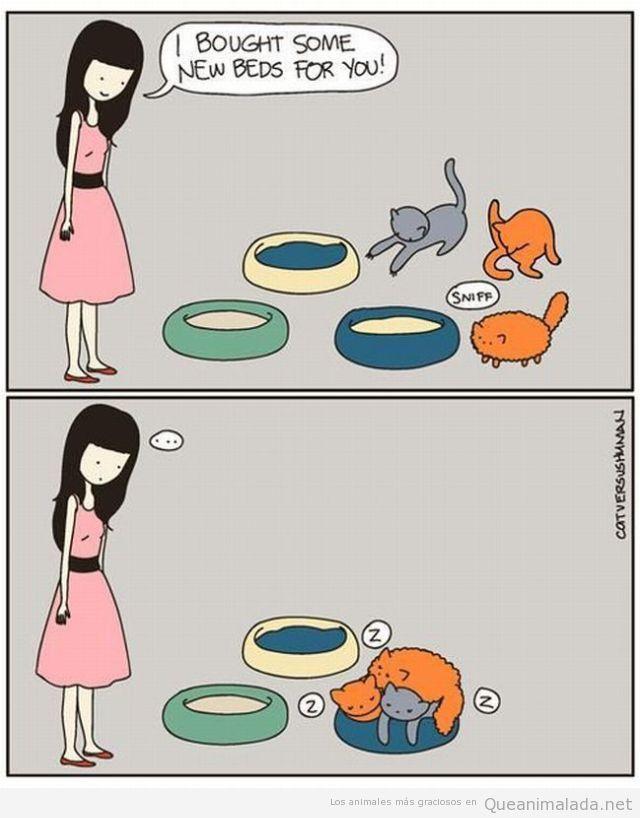 Comic de gatos en el que todos quieren la misma cama