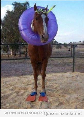 Foto graciosa de un caballo con flotador y equipo de buceo, caballito de mar