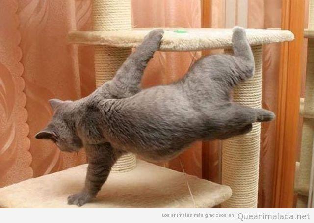 Gato gracioso parece bailar Break Dance