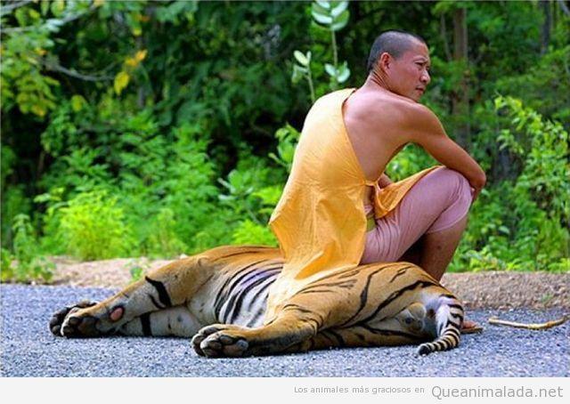 Monje budista sentado encima de un tigre