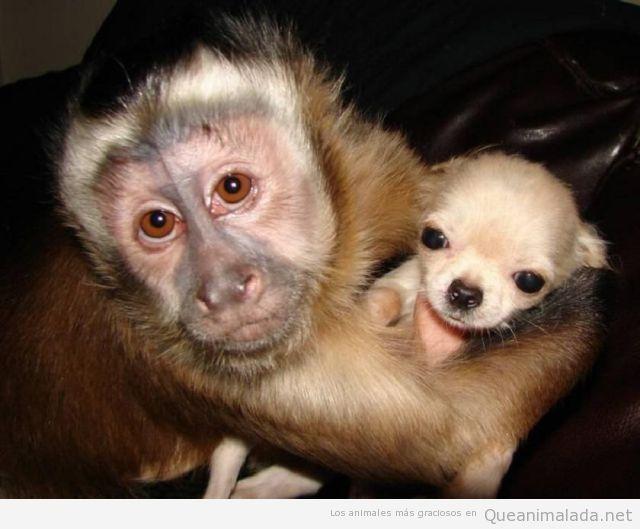 Mono Gracioso | ¡Qué animalada! | Las fotos, los vídeos y los gifs ...