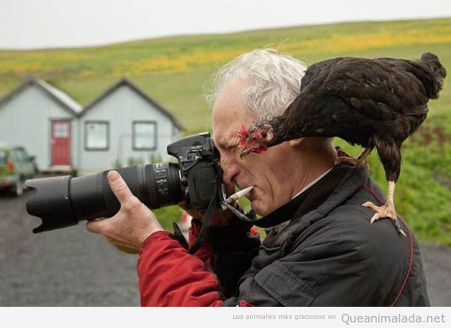 pajaro-gracioso-posado-hombre-fotografo-