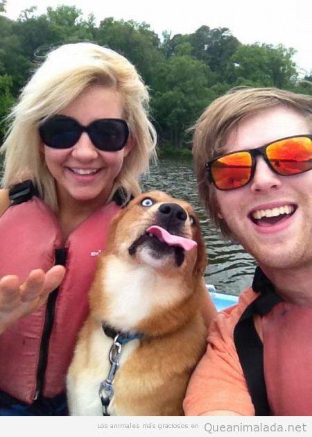 Perro jodefotos gracioso saca la lengua en foto lancha