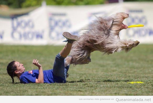 Perro gracioso dando un gran salto para coger el frisbee
