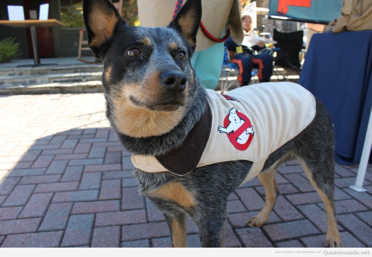 Perro gracioso vestido de Cazafantasmas o Ghostbusters