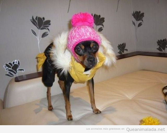 Perro pequeño gracioso vestido gorro y anorak
