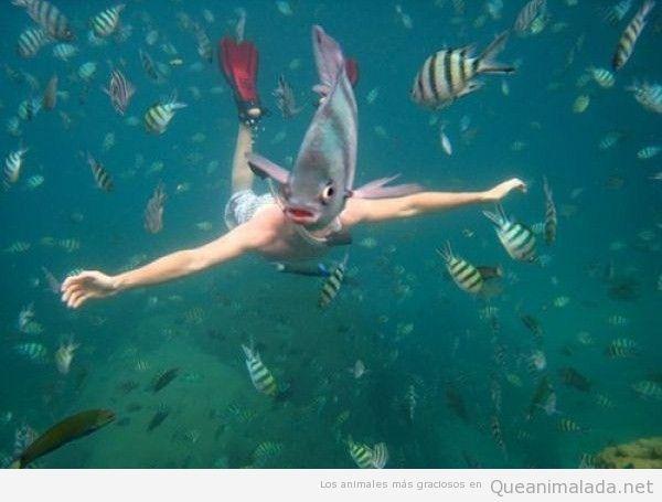 Foto graciosa de un pez jodiendo la foto a un buceador