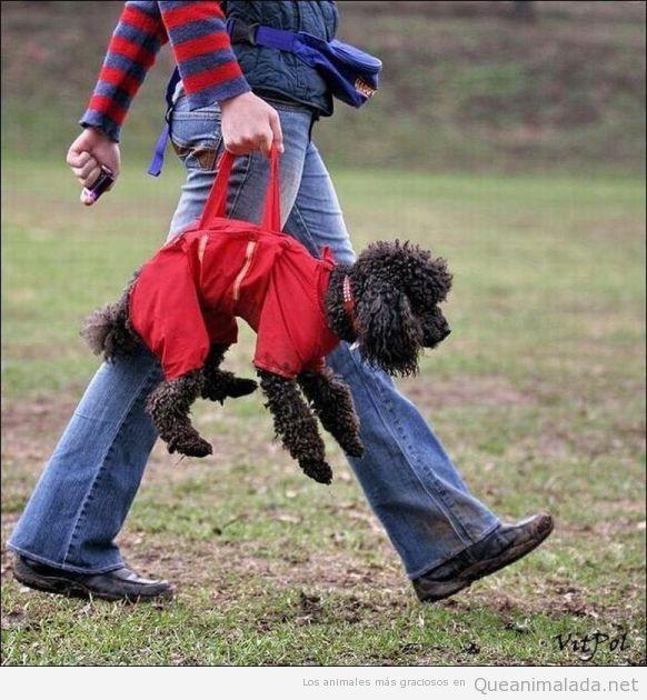 Mujer paseando al perro como si fuese un bolso de mano
