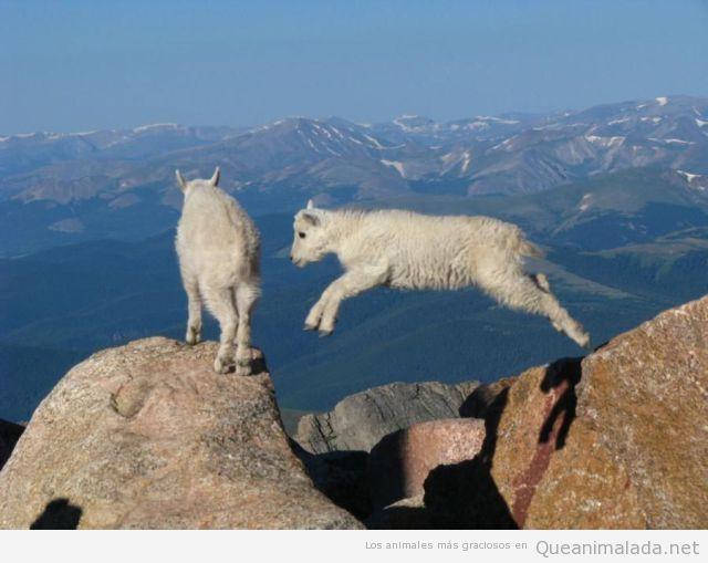 Dos cabras saltando en un pico muy alto de una montaña