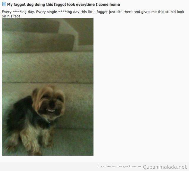Perro gracioso con sonrisa de dientes