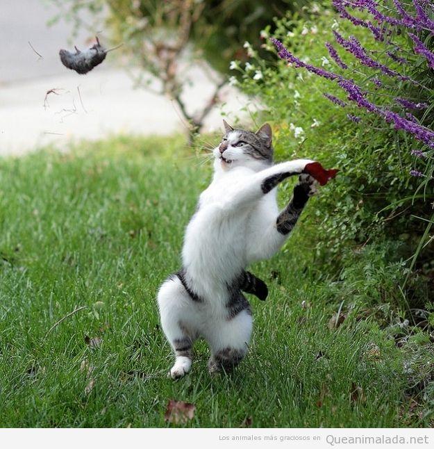 Rat n qu animalada las fotos los v deos y los gifs - Como cazar ratones ...