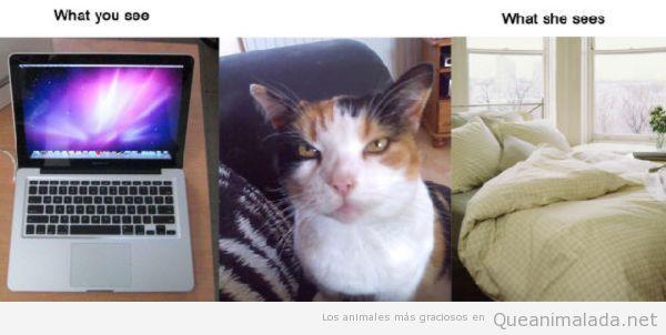Realidad de un gato, un mac es una cama king size