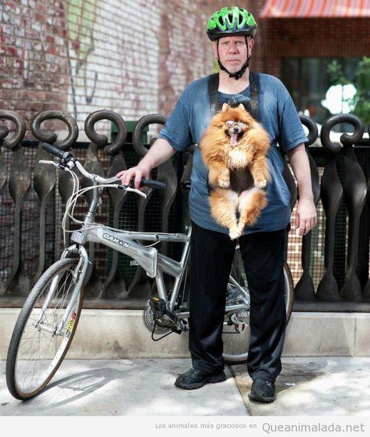 Ciclista con un perro colgado de un arnés
