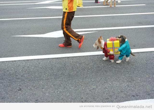 Perro gracioso con un disfraz muy original
