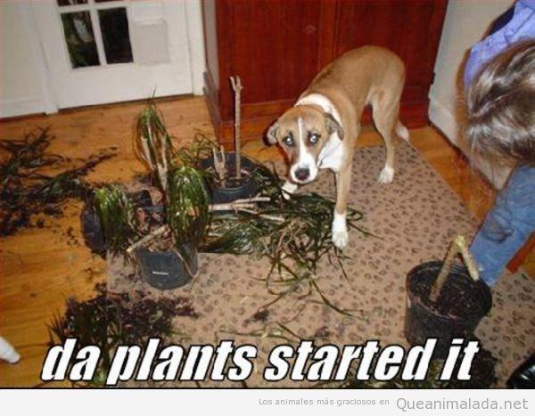 Foto graciosa de un perro destrozando plantas