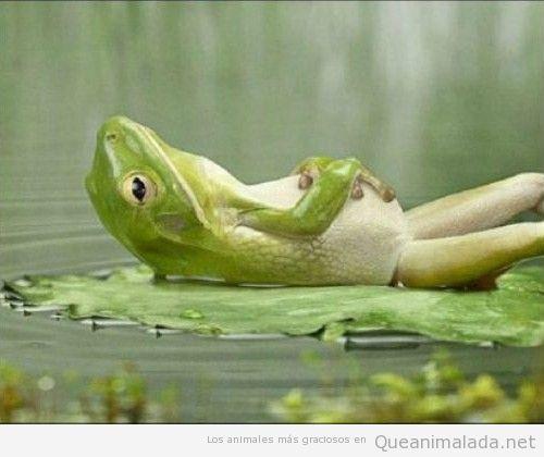 Rana echandose una siesta bocarriba