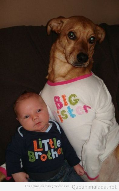 Bebé y perro con camiseta de little brother, big sister