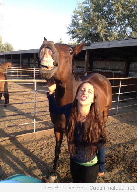 Foto graciosa de un caballo con una chica enseñando dientes