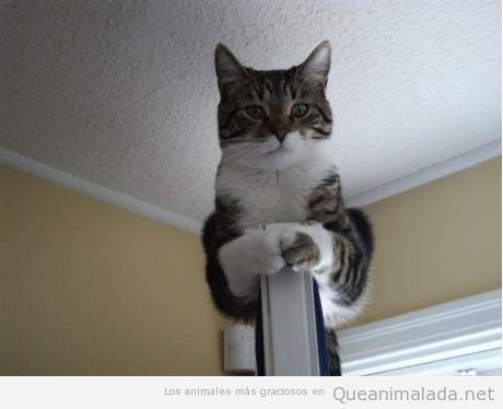 Foto chistosa de gato encima de la puerta