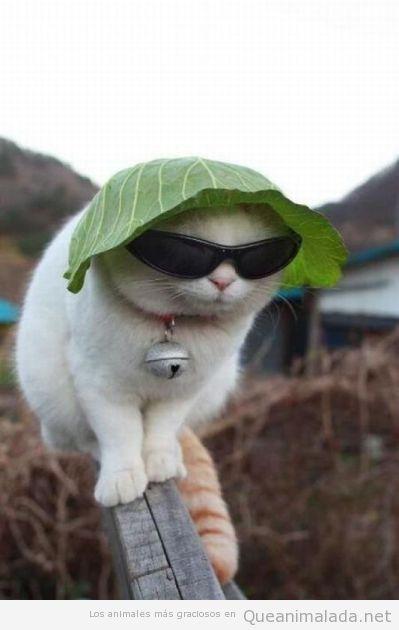 Foto graciosa de un gato con gafas de sol y lechuga en la cabeza