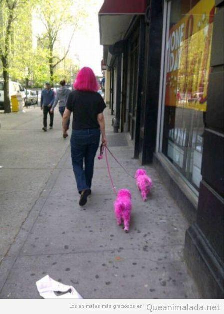 Mujer con el pelo teñido de rosa y sus dos perros también