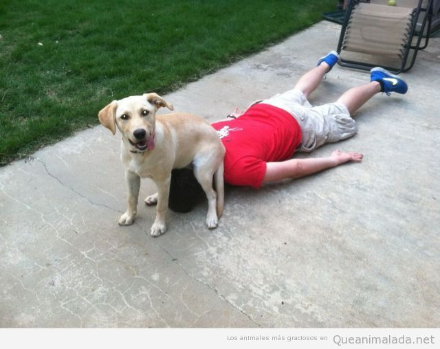 Imagen divertida de un perro sentado en la cabeza de su dueño