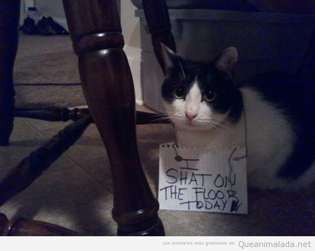 Gato castigado con sentarse en el suelo