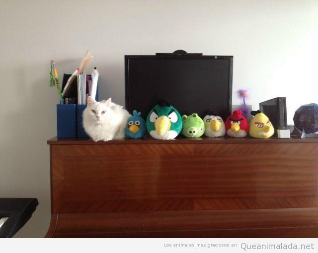 Gato con peluches de Angry Birds