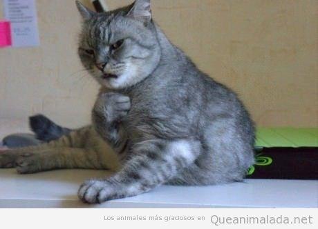 Foto graciosa gato