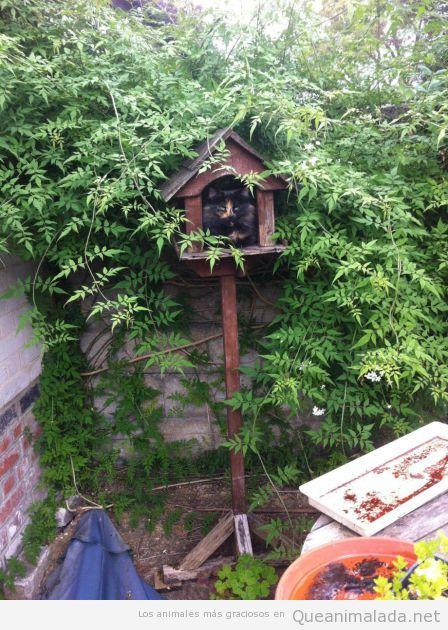 Gato metido dentro de una casa de pájaros