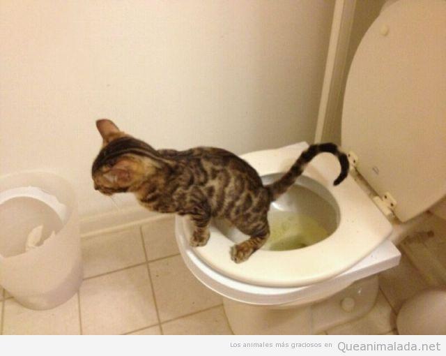 Foto graciosa de un gato sentado taza del váter