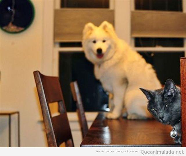 Gato le jode la foto a un perro