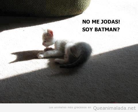 Gato que ve la sombra de Batman