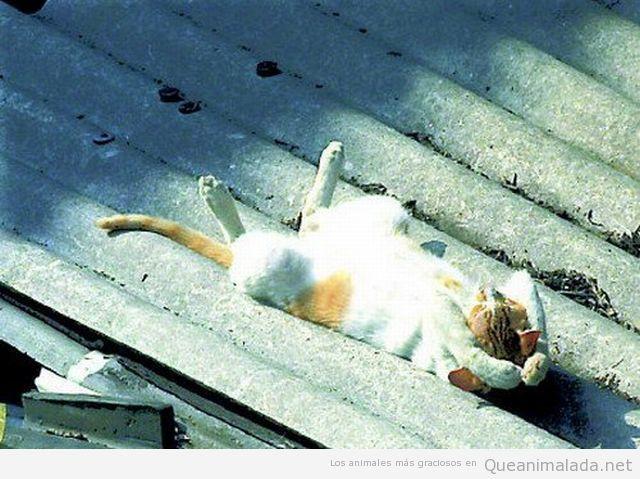 Gato tomando el sol en el tejado de zinc