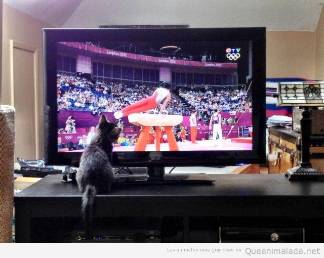 Gato viendo los Juegos Olímpicos por la tele