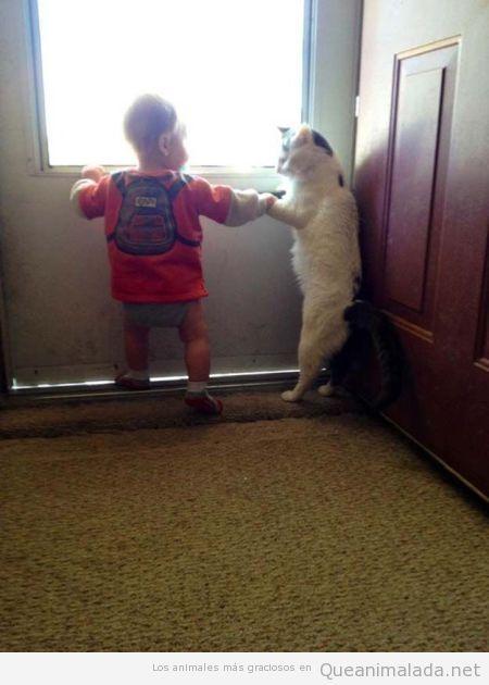 Gato gracioso dando la mano a un bebé para que camine