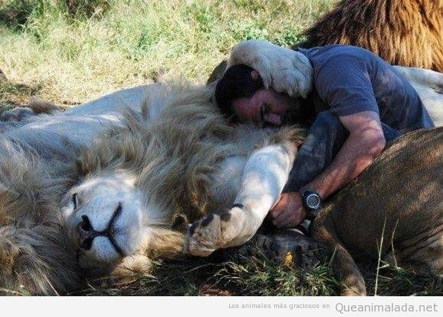 Hombre durmiendo abrazado a leones