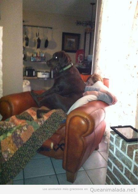 Chica duerme una siesta con un perro enorme encima