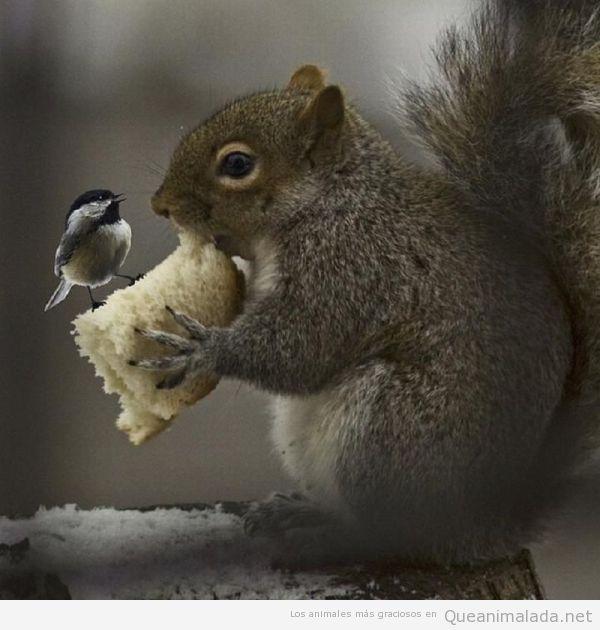 Foto bonita de Pajarito subido al pan de una ardilla