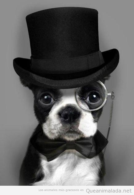 Perro gracioso disfrazado de sir inglés con monóculo y sombrero de copa