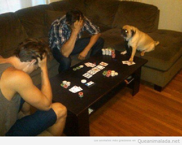 Foto graciosa de un perro jugando al poker con dos hombres