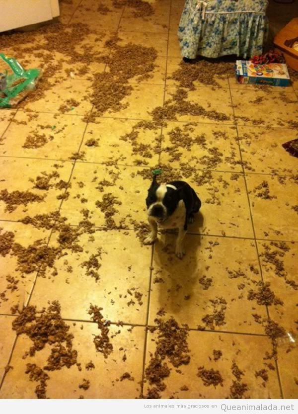 Foto divertida de un perro que ha tirado los cereales por el suelo