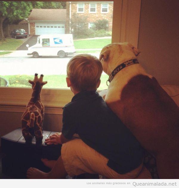 Niño, perro y jirafa de peluche miran por la ventana al camión de los helados
