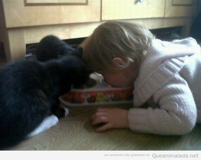 Gato y niño comiendo del mismo cuenco