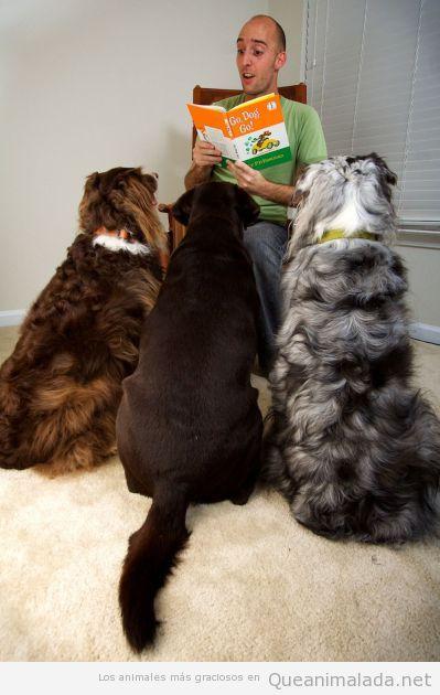 Tres perros junto escuchando atentamente un cuento
