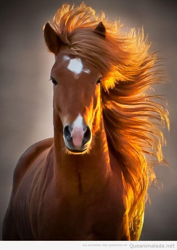 Foto preciosa de una cabellera de caballo al viento