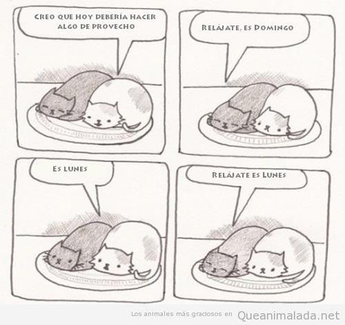 Comic divertido de gatos perezosos