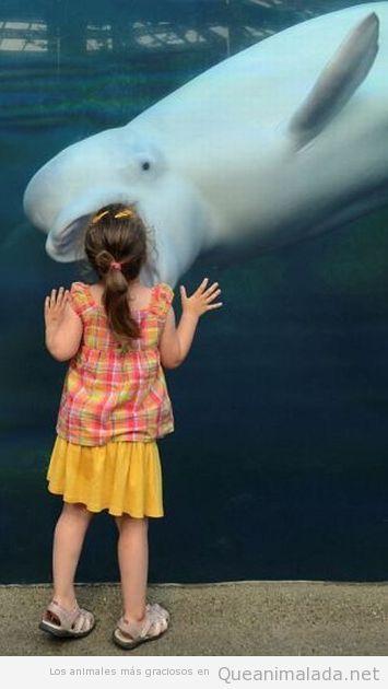Cría de ballena abre la boca para comerse a una niña a través del cristal del acuario